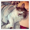 Staci's Kitty, Jazzy. Isn't she adorable?